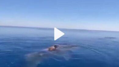 صورة شاهد فيديو يحبـ.ــ.ـس الأنفـ.ـاس.. عربي يقفز على ظهر حوت في البحر الأحمر ويسبح ممطيا ظهره!