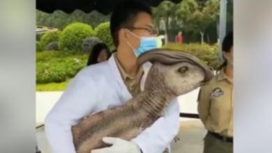 صورة بالفيديو: حـ.ــ.ـيوان غـ.ـريب يظهر في الصين.. ما حكايته؟